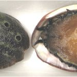 Why should I avoid having abalones during pregnancy