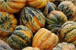 I heard acorn squash helps pregnant women fight constipation. Is this true