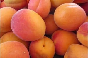 What are the benefits of having apricots during pregnancy?