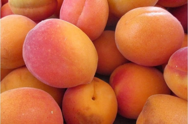 What are the benefits of having apricots during pregnancy