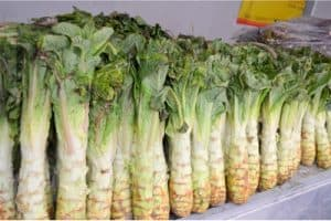 Is it perfectly safe to include celtuce in my pregnancy diet