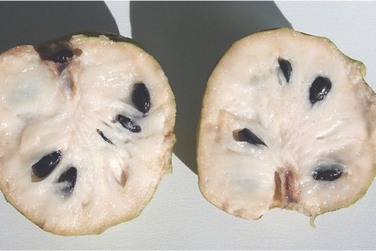 Is it okay to have cherimoya during pregnancy