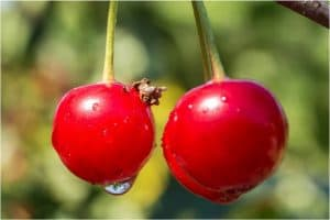 What are the benefits of having cherries sour during pregnancy?