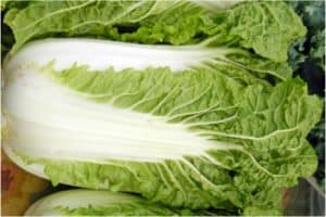 Are you sure leafy veggies like chinese cabbage are fine during pregnancy?