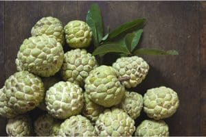 Is it okay to have custard apple (bullock's heart)?