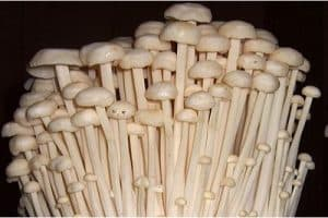What's wrong with eating enoki mushrooms during pregnancy?