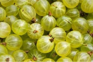 What are the benefits of having gooseberries during pregnancy