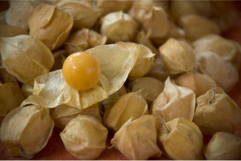 Is it okay to have groundcherries during pregnancy