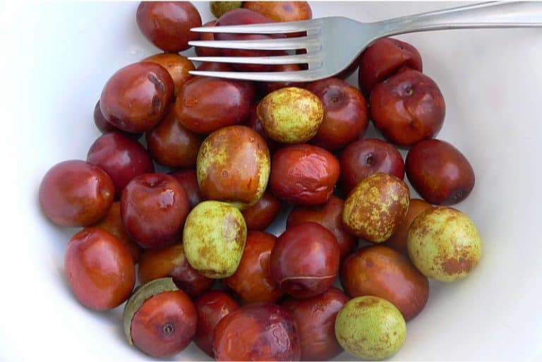 Is it okay to indulge in jujube during pregnancy
