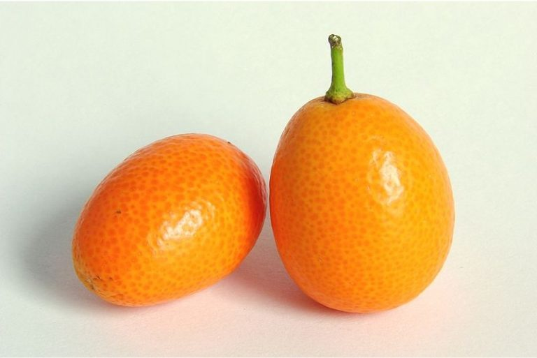 Can I include kumquats in my pregnancy diet