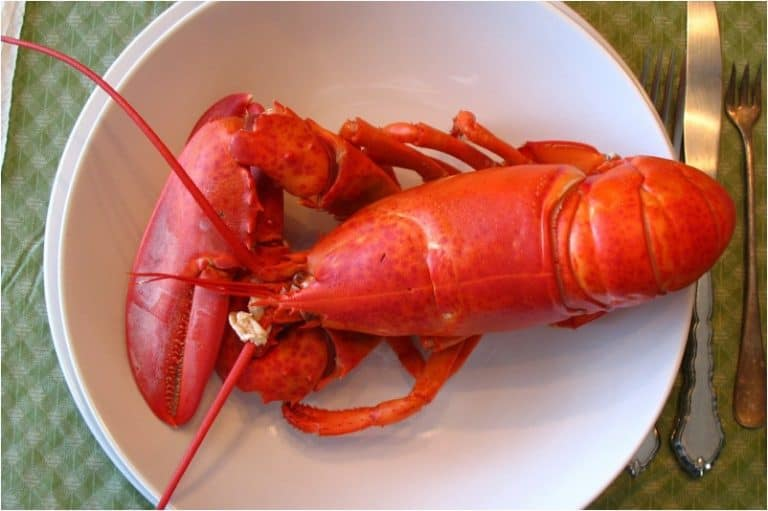 What precautions should I take for eating lobster during pregnancy