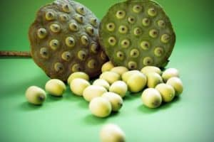 Why should I include lotus seeds (phool makhana) in my pregnancy diet?