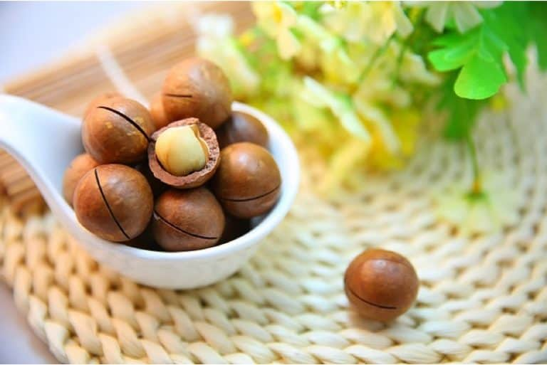 What are the nutritional benefits of having macadamia nuts during pregnancy