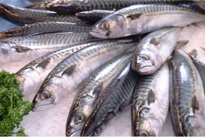What safety issues should I keep in mind with mackerel during pregnancy