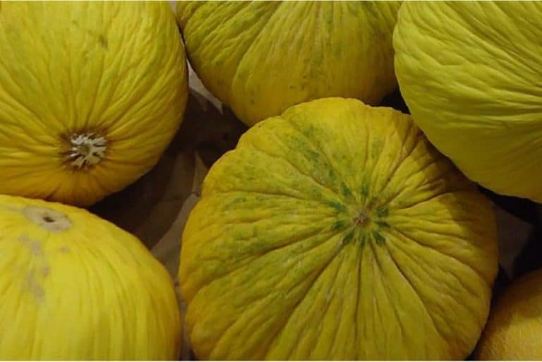 What are the benefits of having melons casaba during pregnancy