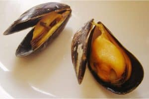 What are the conditions for eating mussel during pregnancy