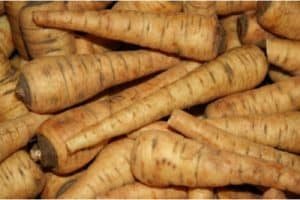 How about including parsnips in my pregnancy diet?