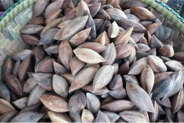 What are the nutritional benefits of having pilinuts during pregnancy