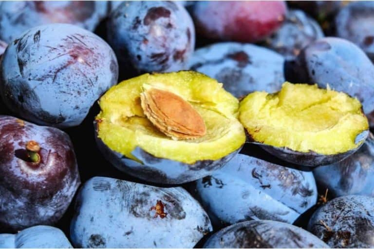 I'm prone to constipation. Can having prunes help me avoid pregnancy constipation