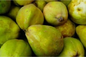 Are there any nutritional benefits of having quinces during pregnancy?