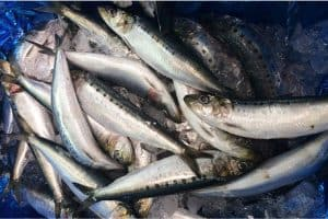 How does including sardine in your pregnancy diet help with neonatal development?