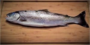 Should I be careful while having seatrout during pregnancy?
