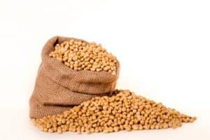 I really like soybean. Should I limit my consumption during pregnancy?