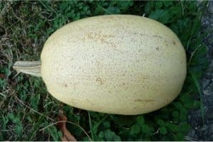How does spaghetti squash help pregnant women?