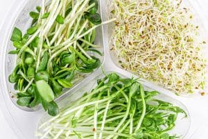 Are sprouts such as bean sprouts, alfalfa sprouts, and wheat-grass healthy for pregnant women?