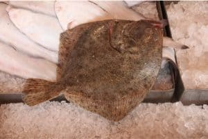 Why should I limit my intake of turbot fish during pregnancy?