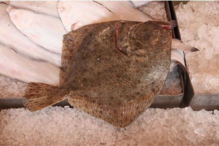Why should I limit my intake of turbot fish during pregnancy